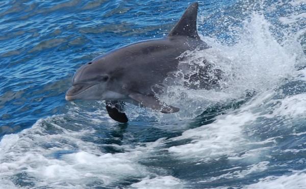 See Dolphins &  Sea Turtles