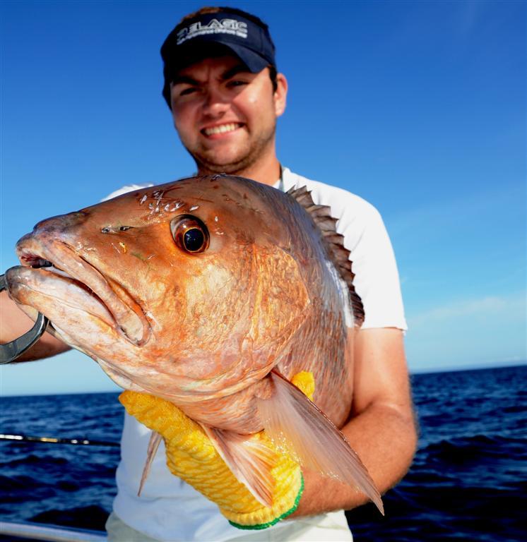 catching mangrove snapper in orange beach