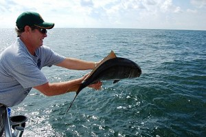 catching and releasing amberjack while fishing in orange beach