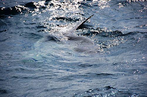 Gulf Shores Spring Break Fishing Charters Begins