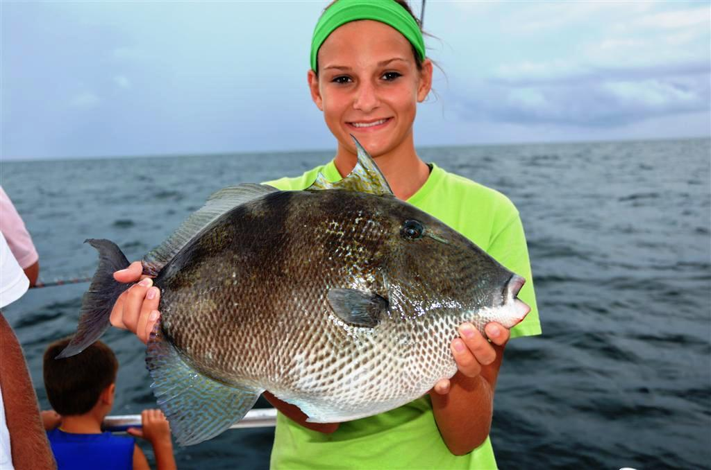 Trigger fish orange beach al distraction charters for Fishing orange beach al