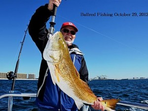 Catching Bull Redfish during Fall and Winter right off the beach while trolling