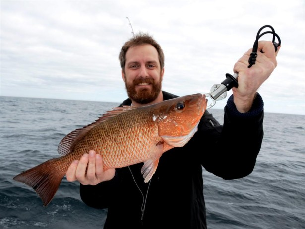 holding a mangrove snapper