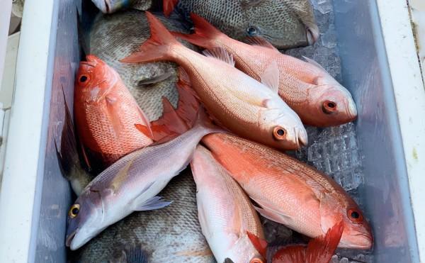 6 Hour Premium Fishing Charter